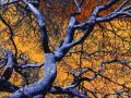 arbre-tortueux-2010-2.jpg