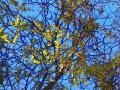 feuillage-d-automne-decembre-2009.jpg