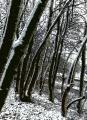le-bois-noir-2010.jpg