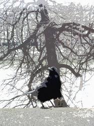 le-corbeau-1.jpg