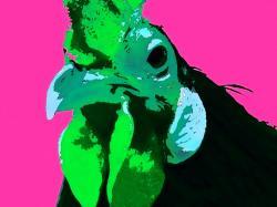 poule-fond-rose-2011.jpg